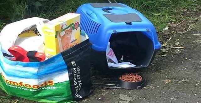 Tuxedo Cat Found Abandoned Near Playing Field with All its Belongings!