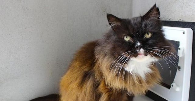 RSPCA in Search of 'Forever Home' For Elderly Cat After 'Devastating' Double Loss!