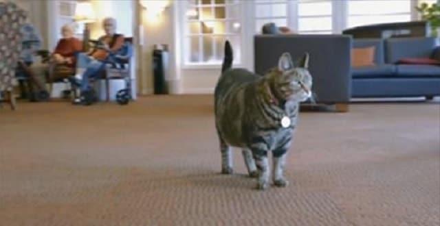 Retirement Community Adopts Cat!