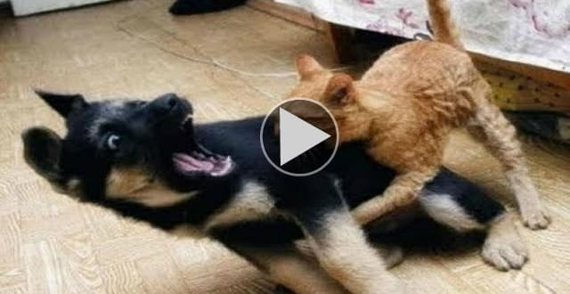 Who is More Superior Animal, Cats or Dogs? – Video