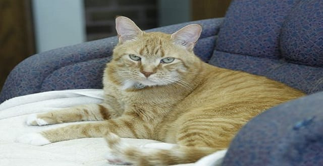 Thorntown Library Takes in Cat Named 'Chance' … By Chance!