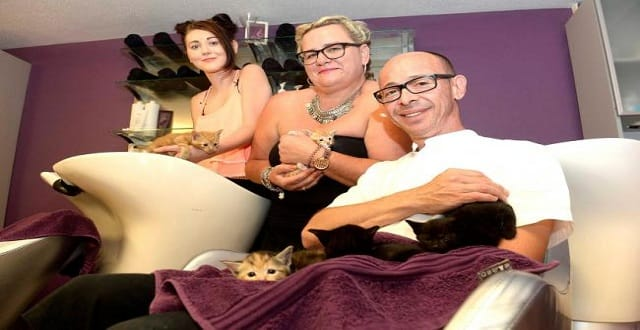Salon welcomes five furry clients after month-old kittens dumped in alleyway