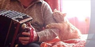 Adorable Ginger Cat Hugs and Kisses Its Human When the Accordion is Played! - VIDEO!
