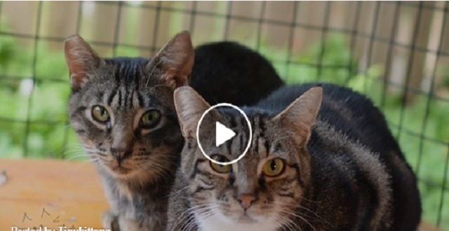 The Love Story of Two Kitties Born in a Feral Cat Colony! – VIDEO!