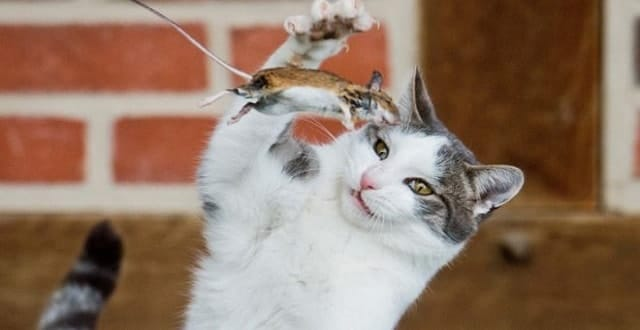 Fur Flies Over New Zealand Cat Ban!
