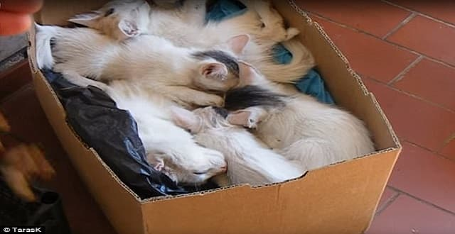 Adorable Moment Five Sleeping Kittens Leap Out of a Box When They Hear Food Being Poured! - VIDEO!