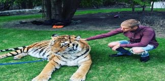 Justin Bieber Warned by Toronto Animal Services After Taking Photos With Wild Cats!