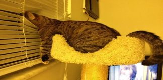 Has Your Cat Taken Over Your Home? 11 Signs That They Have!