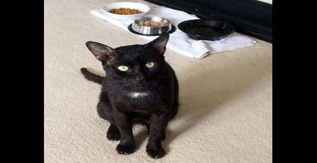 Stray Black Cat from Jamaica Becomes Canadian Citizen!