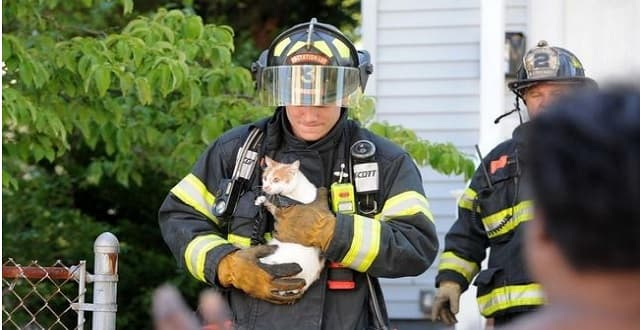 Woman Rescues Three Kittens From Massachusetts Fire. But What About the Mama Cat?