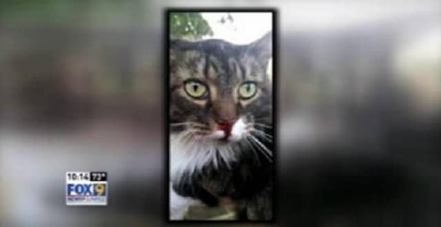Family's Cat Abducted and Thrown From Moving Car!