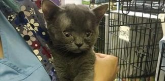 This Special Cat Will Steal Your Heart!