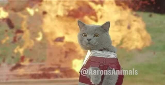 In Iron Cat 2, a Super-Suited Feline Warrior Must Save His Own Kind! – VIDEO!