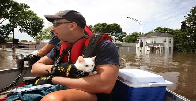 Dog, Cat Flood Survivors Needing New Homes; Dog Behaviorist Claims trauma for Them is Different Than in Humans!