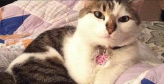 Cat Dies After Being Shot By Pellet Gun in Spokane!