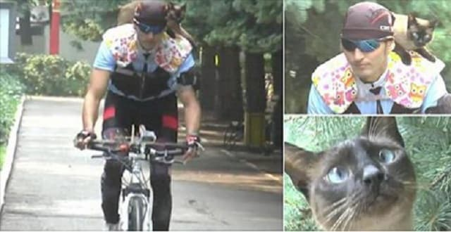 Russian Feline Sits on Professional Cyclist's Shoulders During Bike Rides! – VIDEO!