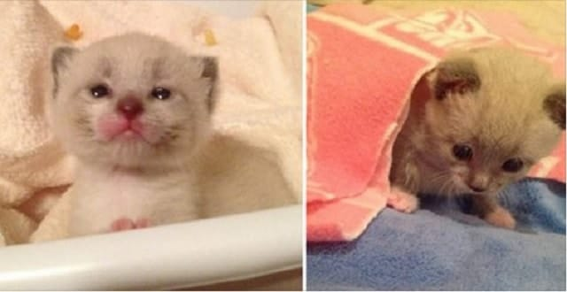 3 Day Old Kitten Tossed From Vehicle Gets A New Life!