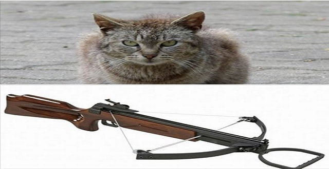 Facebook Group Threatens to Execute Free-roaming Cats!
