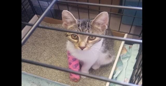 Ten Lives Club Founder Finds Three Cats Near Death Stuffed in Carrier!