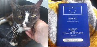 Cat Goes Missing from London Lome, Turns Up in Paris 8 Years Later!