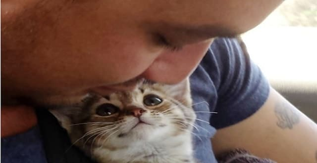 You Have To See This Kitten's Face When He Gets A Furrever Home!