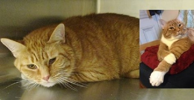 Woman Takes a Chance on a Sad Ginger Cat in a Shelter, and Before Too Long, a Miracle Happened!
