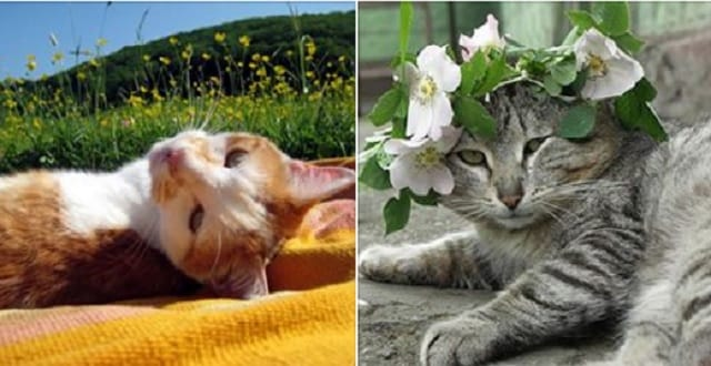 How to Keep Your Cat Cool During the Hot Days of Summer!