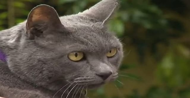 Cat Reunited with Portland Family After 11 Long Years!