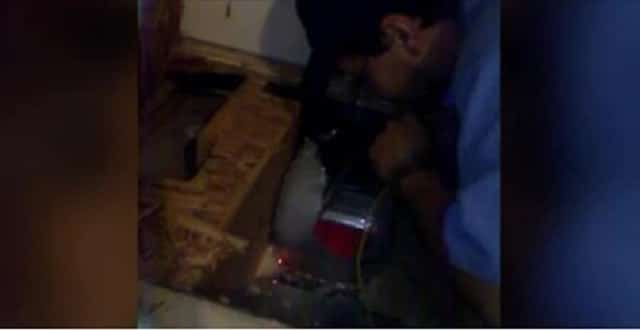 Rescue Kitten Rescued Again. This Time, From Home's Air Ducts! – VIDEO!