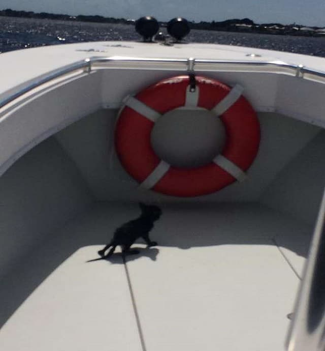 Rescued at sea: A drowning kitten was pulled from the St. Lucie River by a deputy on Tuesday, July 12. (Martin County Sheriff's Office Facebook page)