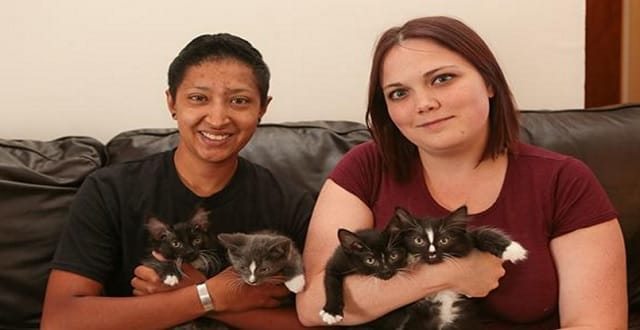 Scalped, Burned Kittens Up for Adoption Soon in North Carolina!