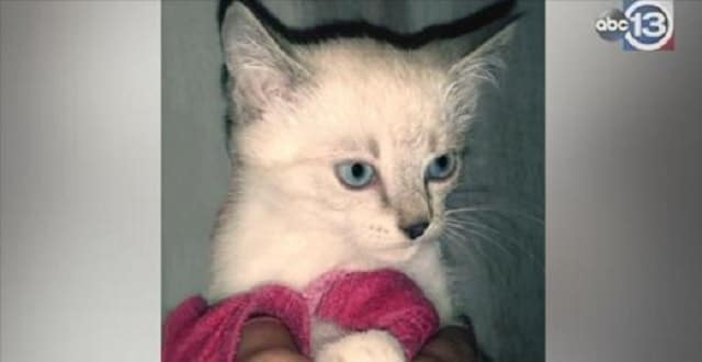 Two Mama Cats and Their Seven Kittens Rescued From Mobile Home Park!