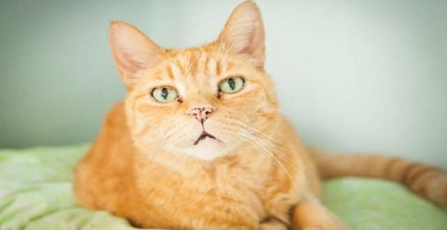 16-year-old Senior Cat Given Chance To Live Out Golden Years!