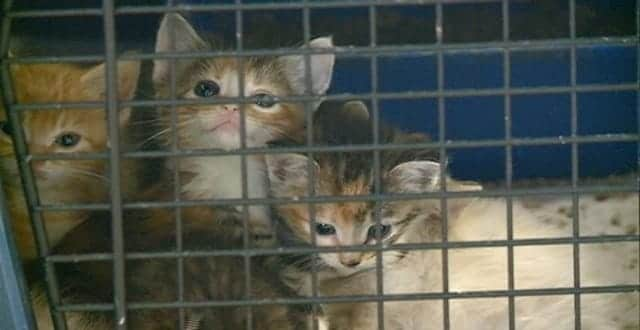 """Eight Kittens Found in Plastic Tote in Wisconsin Doing """"Wonderfully""""!"""