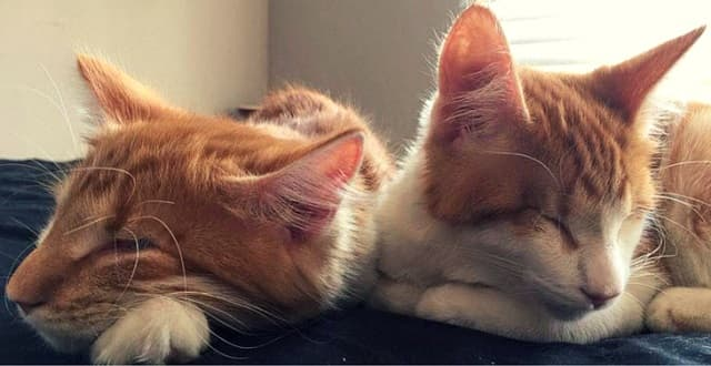 The Magical Love Between These Two Blind Kittens Knows No Bounds!