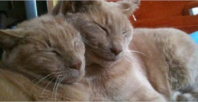 16-Year-Old Cat Reunites with Brother After 3 Years!