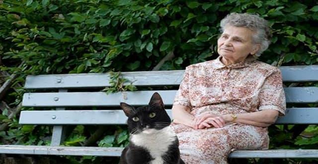 """Cats for Companionship"" Program Unites Homebound Senior Citizens with Furry Friends"