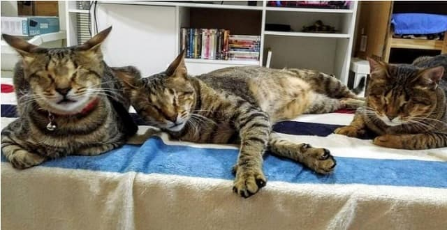 The Fate of These Three Blind Cat Siblings Will Inspire You!