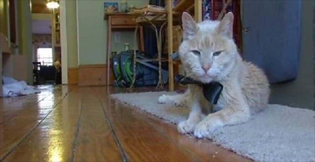 Tigger the Canton Cat working on Bucket List!