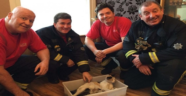 Fire Crew Rescues Pregnant Cat Who Gives Birth in Chimney!