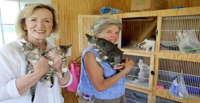 The Ark Cat Sanctuary Places 546 Cats!