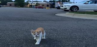 Stray Kitten Interrupts A Live News Cast And Instantly Becomes A Sensation!!