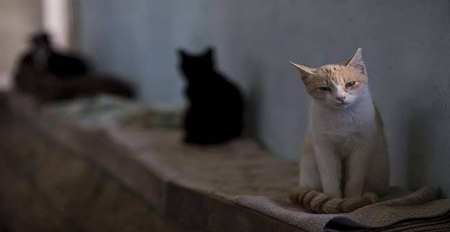 'Scrambling Every Day': Stray Cats Struggle to Survive in Jerusalem!