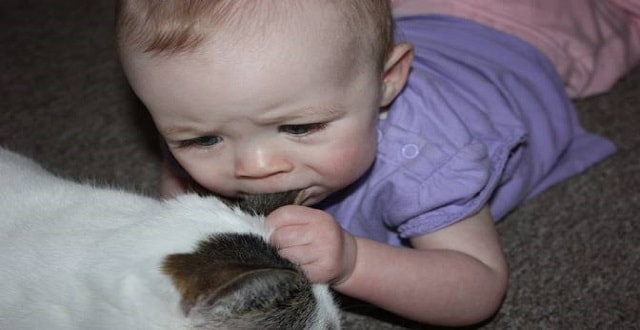 VIDEO: Heartfelt Reunion Between 5-year-old Girl and Her 'Found' Missing Cat!