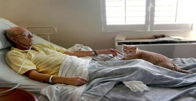 Tom the Cat Has 'Sixth Sense' in Comforting Ailing Veterans!