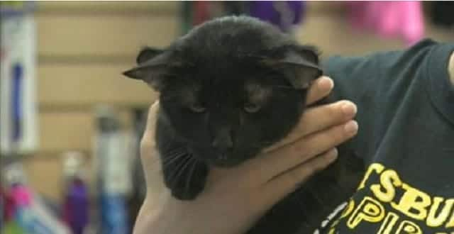 UPDATE – 4-Eared Cat Named Batman Finds a Forever Home in Pennsylvania! – VIDEO!