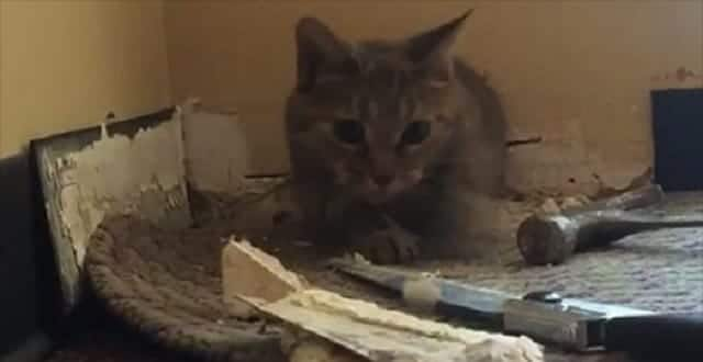 Watch Animal Rescuers Free a Cat From the Wall of a Boston Church! VIDEO
