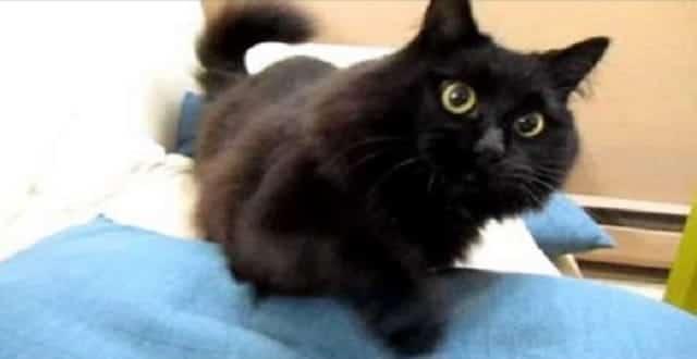 World! Meet Theo the Talking Cat! – VIDEO!