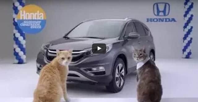 Honda Celebrated International Cat Day With Bizarre Cat Choir Spot! – VIDEO!