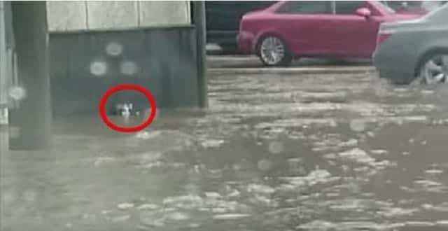 Driving Through Floodwaters, A Man Spots This and Jumps Into Action! – VIDEO!